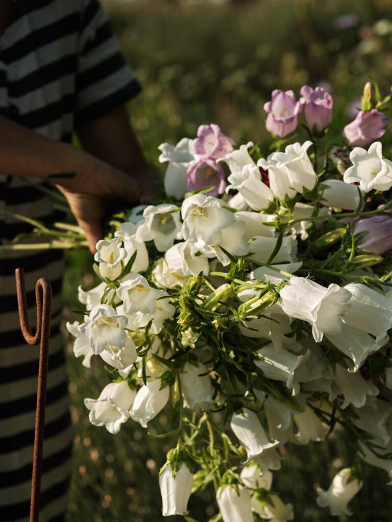 Flower arranging - British Flowers - Wetherly