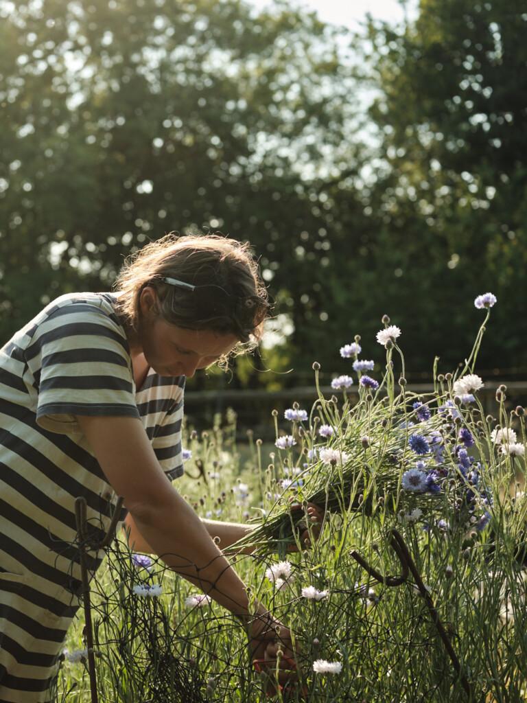 British cut flowers - Wetherly