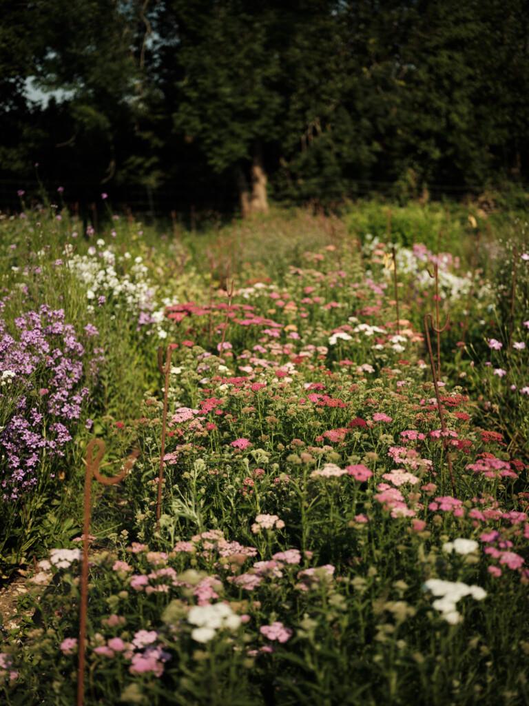 A British flower farm - Wetherly